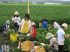 えだまめ収穫体験ツアー2010.7.31 013.jpg