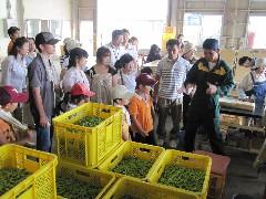えだまめ収穫体験ツアー2010.7.31 029.jpg