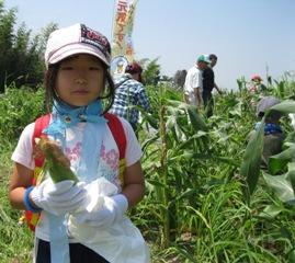 とうもろこし収穫体験子供.jpg