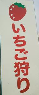 イチゴ狩りPマーク.JPG