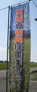 仙台白菜のぼり.jpg