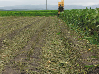 収穫後2.jpg