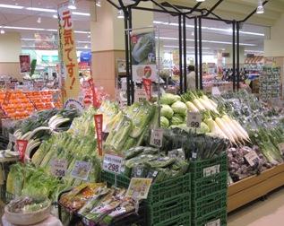 宮城野菜祭り2012.11.23.jpg