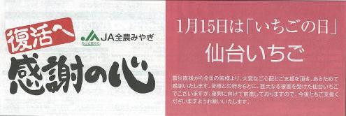 復活「仙台いちご」.JPG