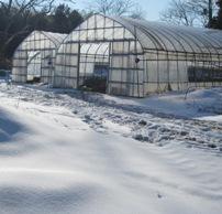 曲がりねぎウス と雪.jpg