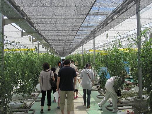 松島トマトハウス.JPG