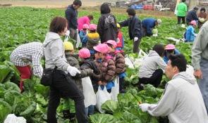 白菜収穫体験.jpg