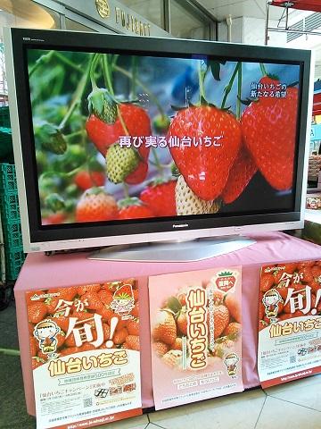 藤崎2014.4 (1).JPG