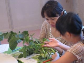 野菜体感講座 (えだまめ.jpg
