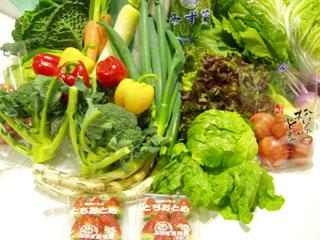 野菜達1.jpg