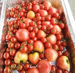野菜トマトすくい.JPG