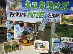 キュウリビズセレモニー大田市場 (14).JPG