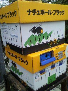 サンフレッシュ松島2012.5.22 (2).jpg