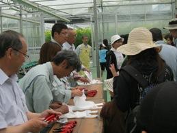 トマト収穫2013.6.2入場.jpg