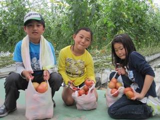 トマト収穫2013.6.2-1.jpg