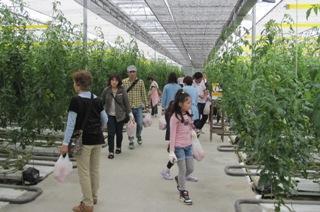 トマト収穫2013.6.2-2.jpg