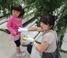 トマト収穫2013.6.2-7.jpg