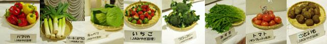 0811野菜たち.jpg