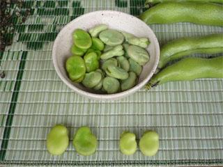 豆の写真.jpg