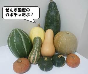 カボチャ集合(台詞).jpg